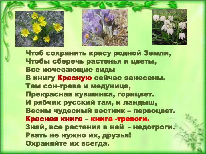 Чтоб сохранить красу родной Земли,