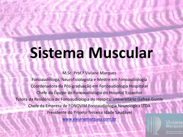 sistema muscular n.