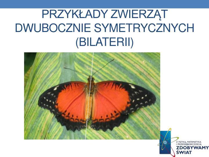 Przykłady zwierząt dwubocznie symetrycznych (Bilaterii)