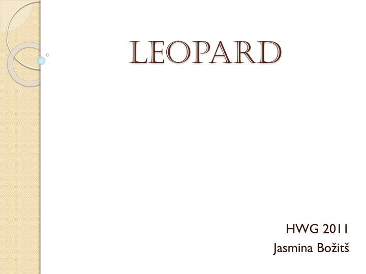 leopard n.