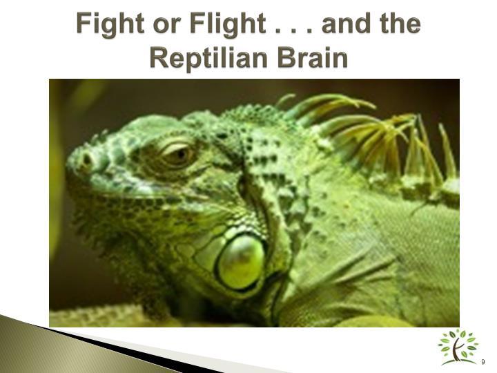 Fight or Flight . . .