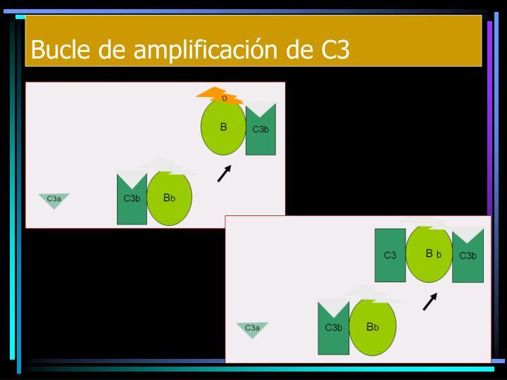 Bucle de amplificación de C3
