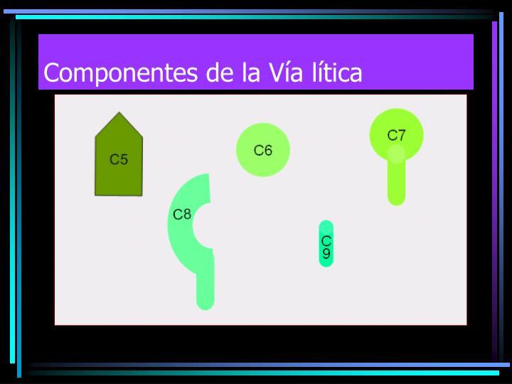 Componentes de la Vía lítica