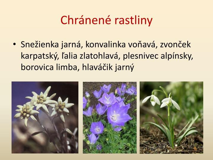 Chránené rastliny