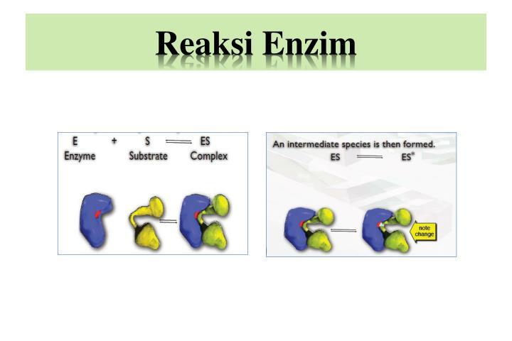 Reaksi enzim1