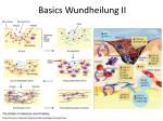 basics wundheilung ii