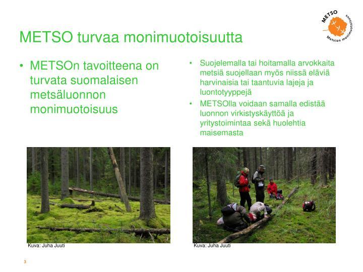 Metso turvaa monimuotoisuutta
