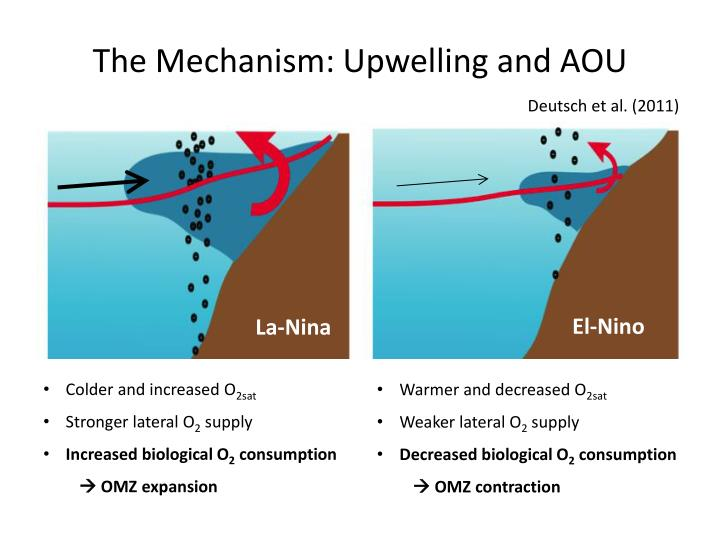 The Mechanism: Upwelling and AOU