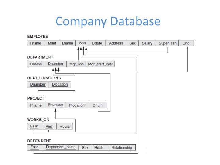 company database n.