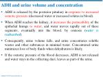 adh and urine volume and concentration