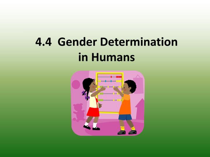 sex determination in humans ppt