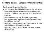 keystone review genes and proteins synthesis1
