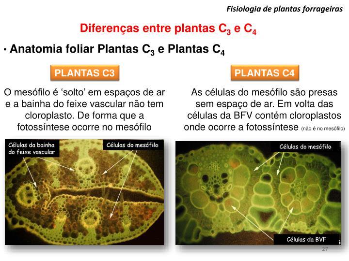 PPT - Fisiologia de plantas forrageiras PowerPoint Presentation - ID ...