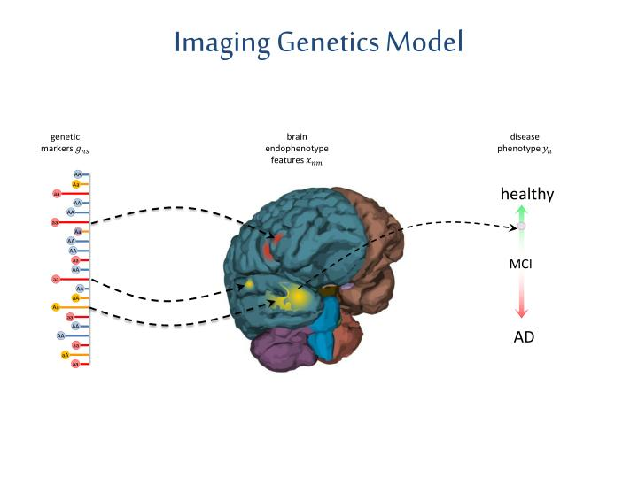Imaging Genetics Model