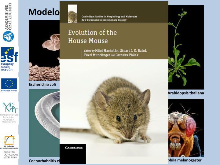 Modelový organismus