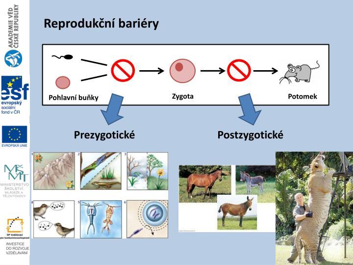 Reprodukční bariéry