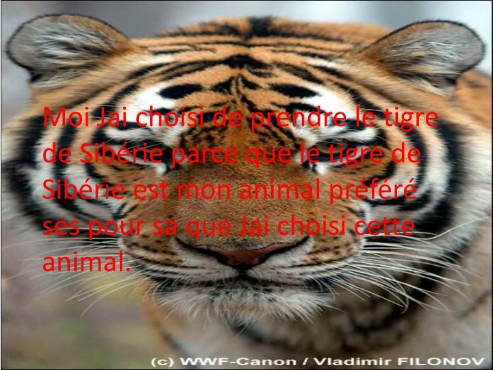 Moi Jai choisi de prendre le tigre de Sibérie parce que le tigre de Sibérie est mon animal préféré  ses pour sa que Jai choisi cette animal.