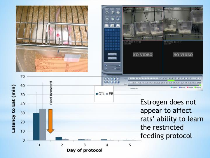 Estrogen does not appear to affect rats' ability to learn the restricted feeding protocol