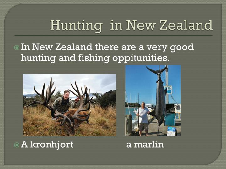 H unting in new zealand