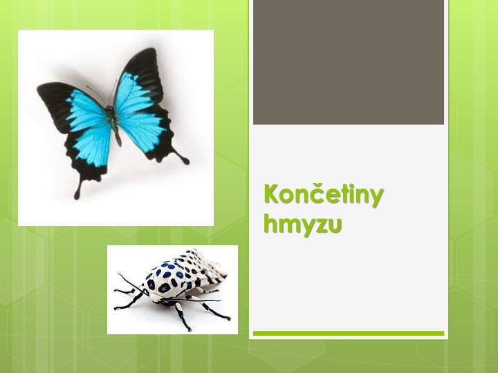K on etiny hmyzu
