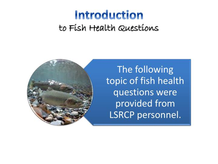 Introduction to fish health questions