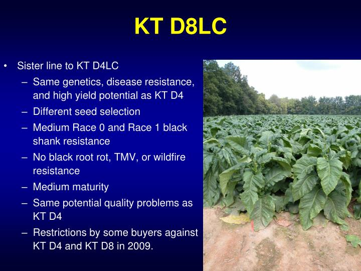 Sister line to KT D4LC
