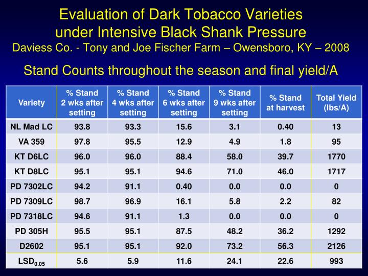 Evaluation of Dark Tobacco Varieties