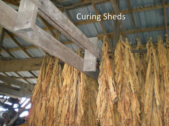 Curing Sheds