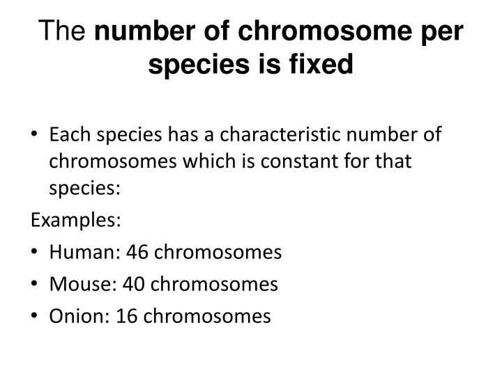 The number of chromosome per species is fixed
