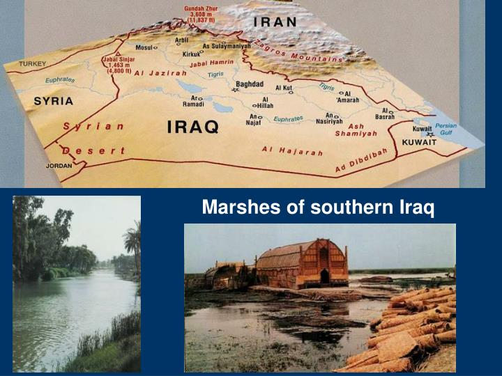 Marshes of southern Iraq