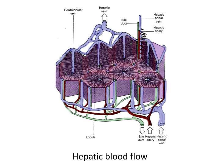 Hepatic blood flow
