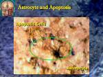 astrocyte and apoptosis