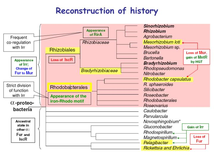 Reconstruction of history