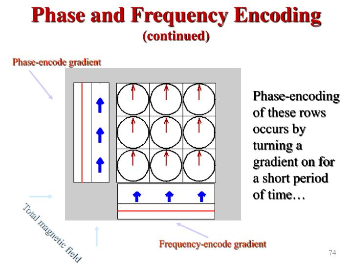 Phase and Frequency Encoding