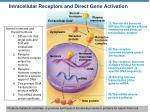 intracellular receptors and direct gene activation1