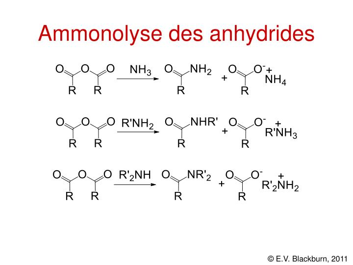 Ammonolyse des anhydrides