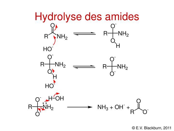 Hydrolyse des amides
