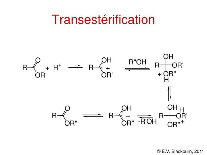 Transestérification