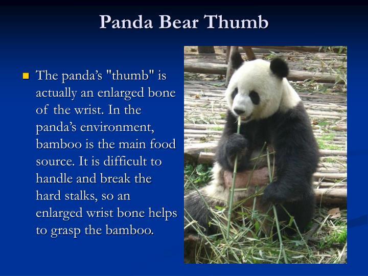 Panda Bear Thumb