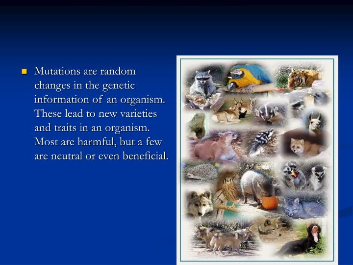 Mutations are random changes in the genetic information of an organism. These lead to new varieties ...