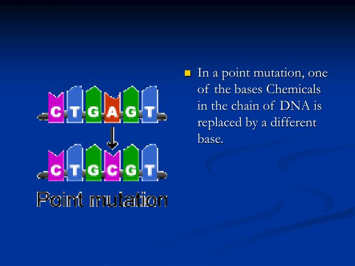 In a point mutation, one of the bases Chemicals in the chain of DNA is replaced by a different base.