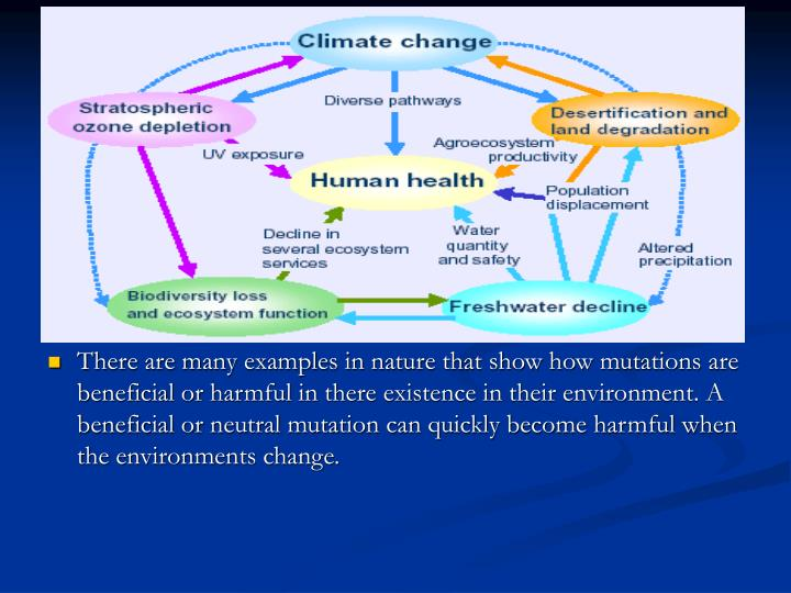 There are many examples in nature that show how mutations are beneficial or harmful in there existence in their environment. A beneficial or neutral mutation can quickly become harmful when the environments change.