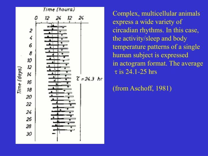 Complex, multicellular animals