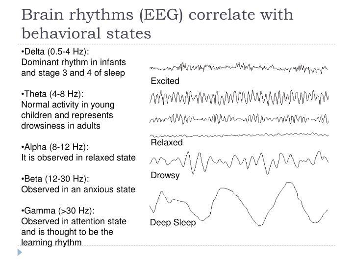 Brain rhythms (EEG) correlate with behavioral states