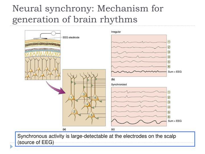 Neural synchrony: Mechanism for generation of brain rhythms