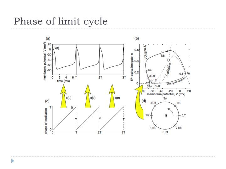 Phase of limit cycle