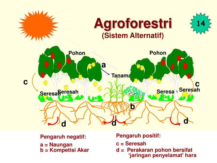 Agroforestri