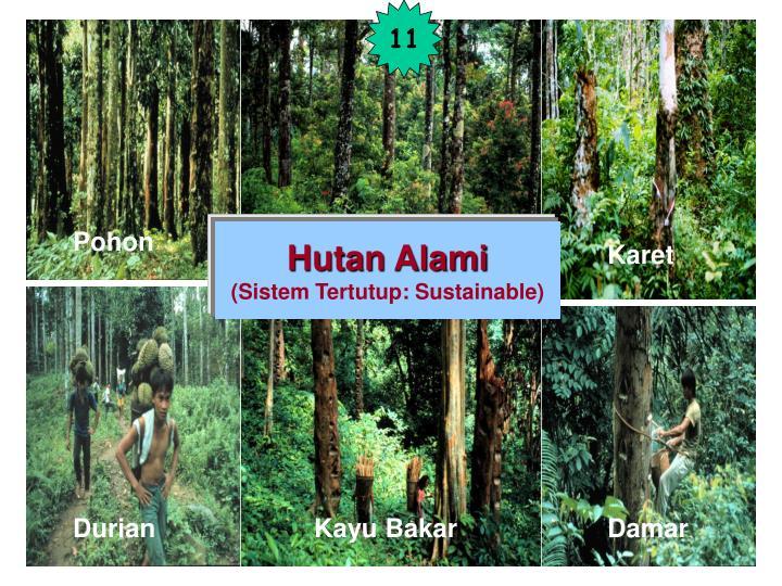 Hutan Alami