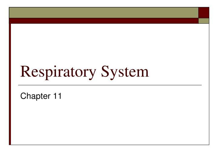 respiratory system n.