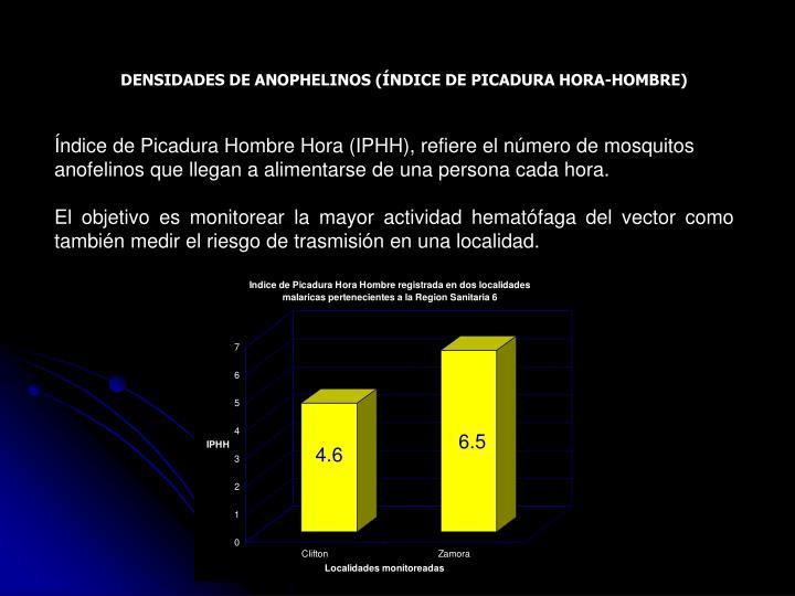DENSIDADES DE ANOPHELINOS (ÍNDICE DE PICADURA HORA-HOMBRE)